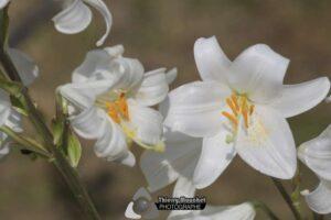 Au Pays d'Audrey - Le Domaine du Mas de l'Olivine
